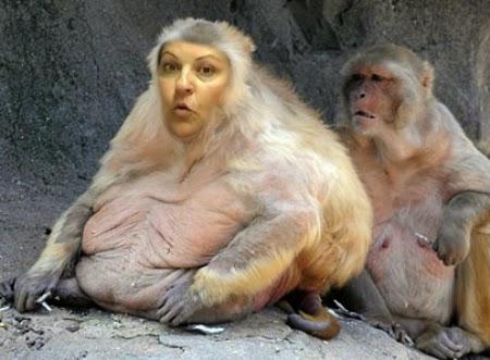 סימונה שטיימנץ - משתמשת בפרצופה דבוק על תמונת קוף להרעיל ולהעליל נגד אמהות בבתי משפט